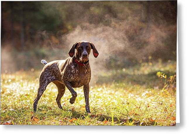 Free Shipping *** German Shorthair Pointer Fine Art Note Cards set of Four