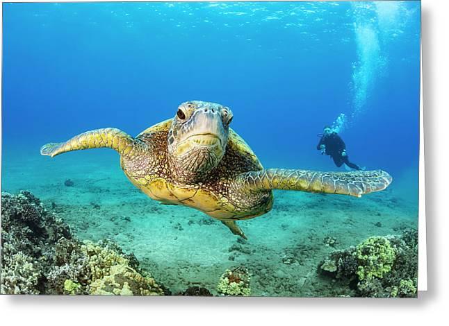 Green Sea Turtle  Chelonia Midas Greeting Card