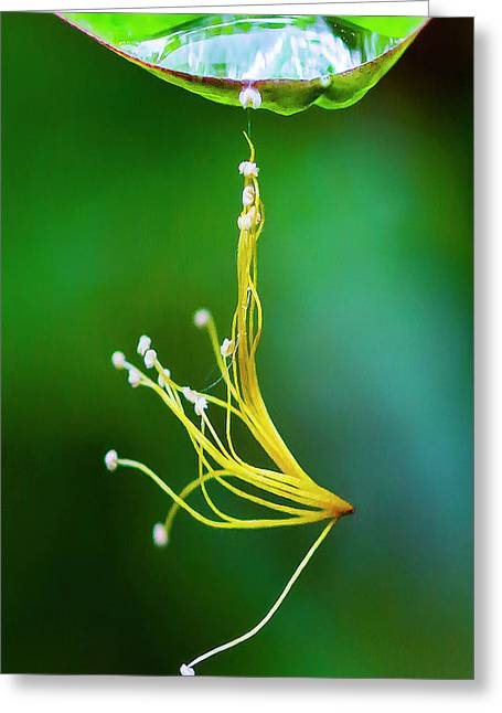Hanging By A Thread Greeting Card