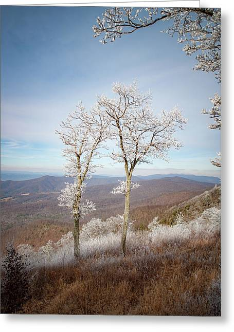 Hoarfrost Gathers Greeting Card