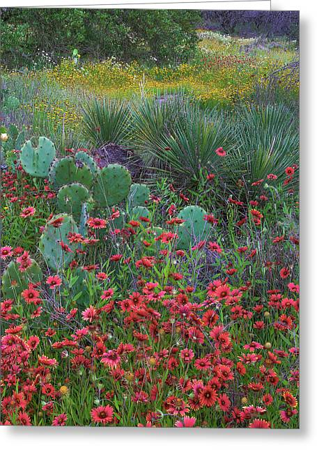 Indian Blanket Flowers And Opuntia Greeting Card