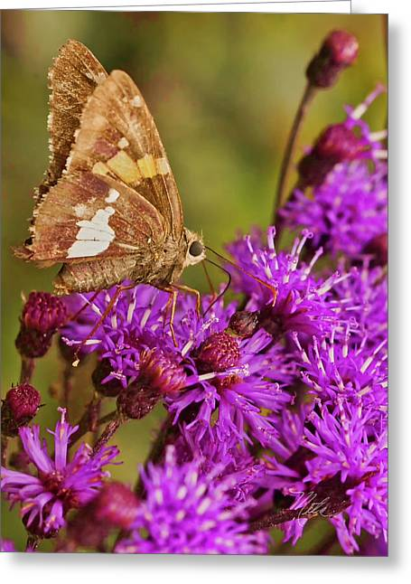 Moth On Purple Flowers Greeting Card
