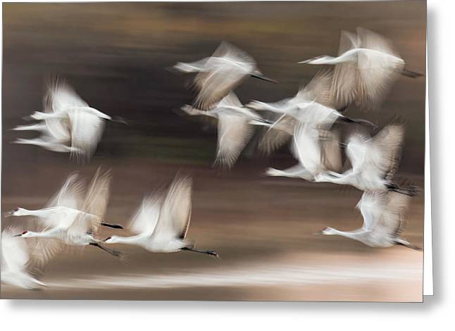 Motion Blur, Flock Of Sandhill Cranes Greeting Card