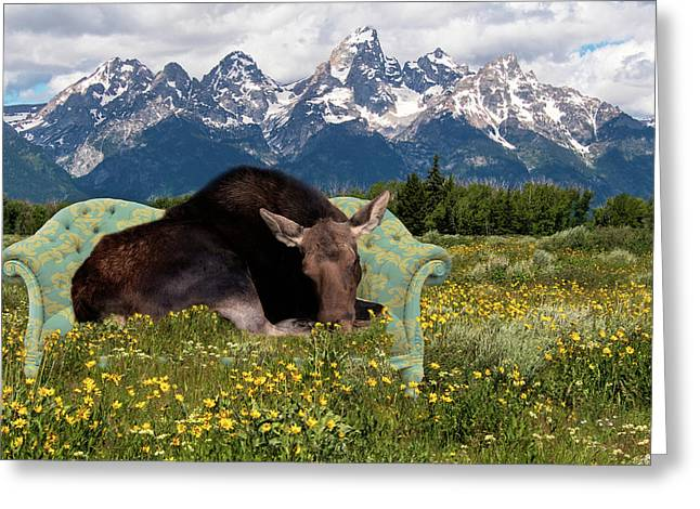 Nap Time In The Tetons Greeting Card