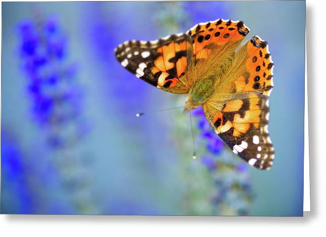 Greeting Card featuring the photograph Painted Lady Butterfly by Nicole Young