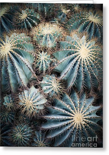 Rustic Macro Shot Of Cactus - Tropical Greeting Card