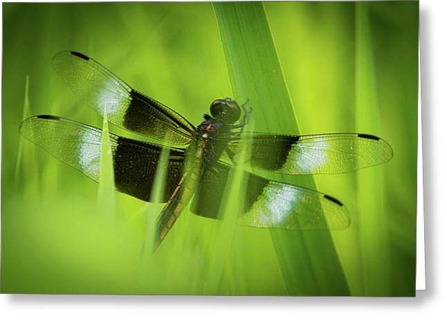 Greeting Card featuring the photograph Secret Dragon by Jeff Phillippi
