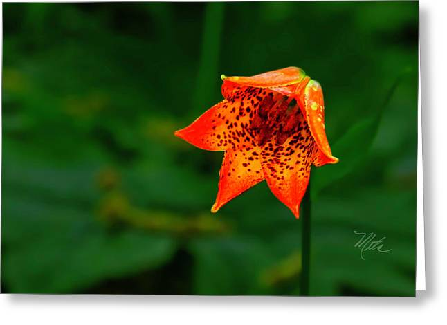 Greeting Card featuring the photograph Single Orange Grays Lily by Meta Gatschenberger