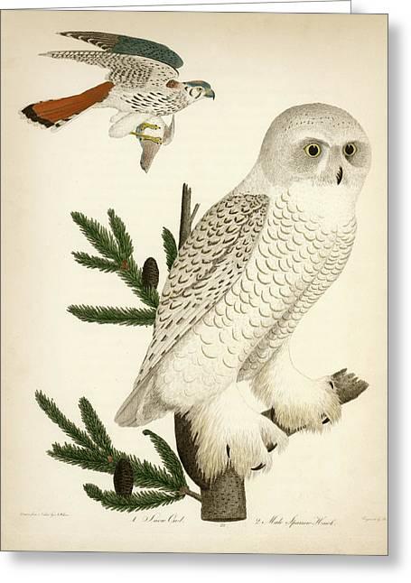 1. Snow Owl. 2. Male Sparrow-hawk. Greeting Card