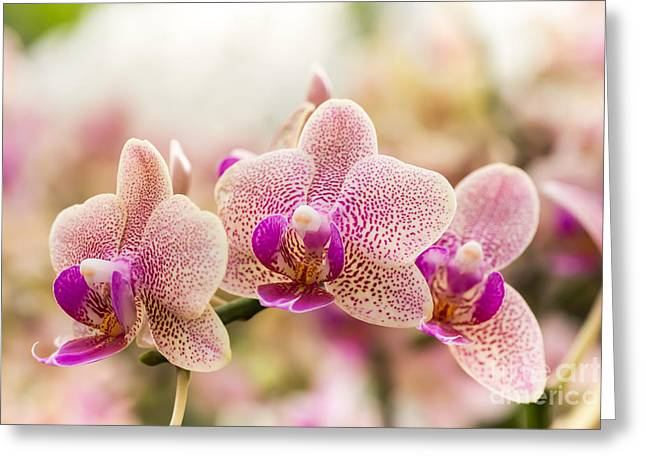 Streaked Orchid Flowers. Beautiful Greeting Card