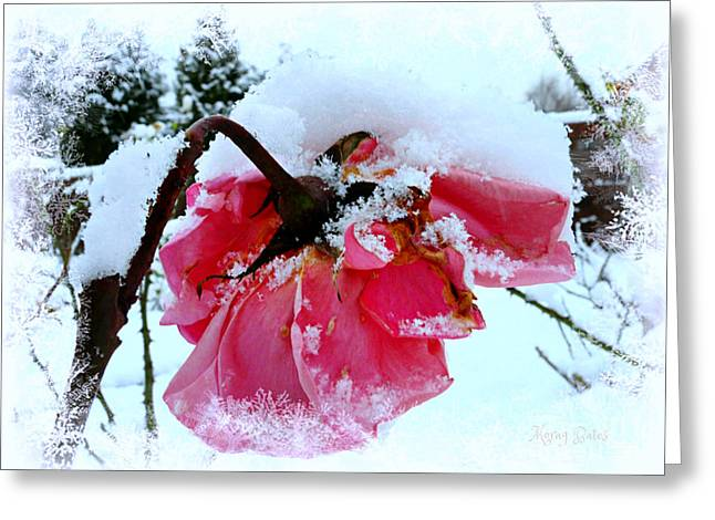 The Last Rose Greeting Card