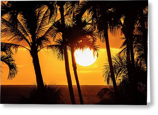 The Setting Sun Through Silhouetted Greeting Card