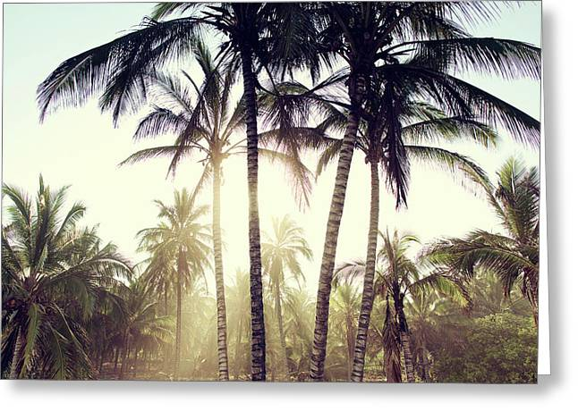Ticla Palms Greeting Card