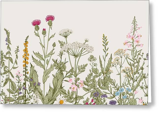 Vector Seamless Floral Border. Herbs Greeting Card