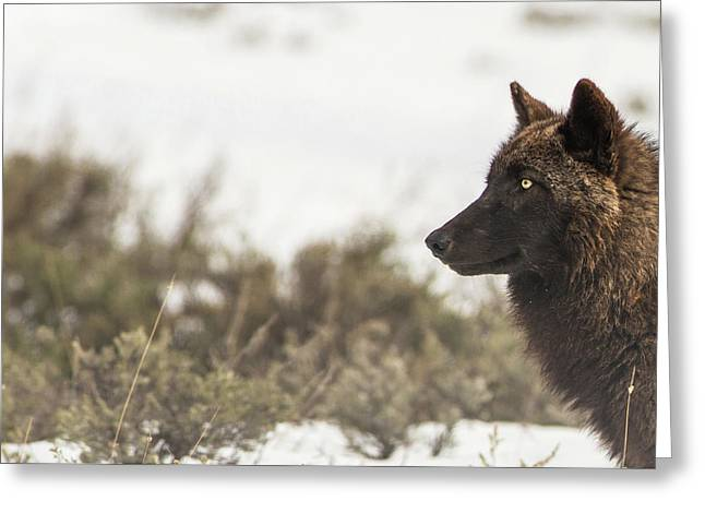 Greeting Card featuring the photograph W15 by Joshua Able's Wildlife