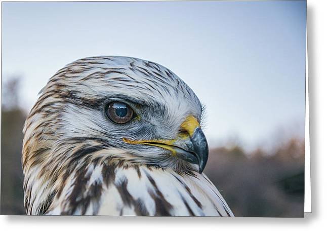 Greeting Card featuring the photograph B2 by Joshua Able's Wildlife