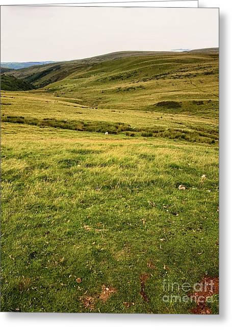 Landscape With Sheep In Wales Greeting Card