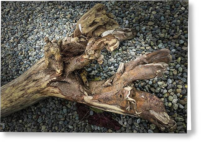 Greeting Card featuring the photograph Wood Log In Nature No.39 by Juan Contreras