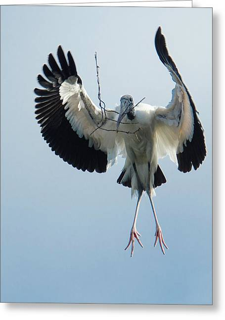 Woodstork Nesting Greeting Card