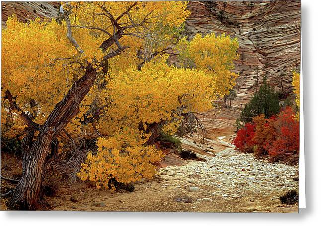 Zion National Park Autumn Greeting Card