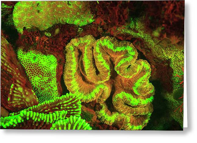 Natural Occurring Fluorescence Greeting Card by Stuart Westmorland