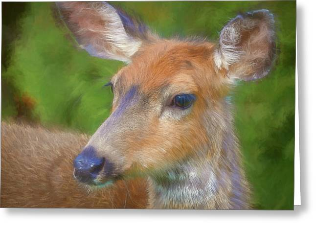 Usa, Washington State, Seabeck Greeting Card by Jaynes Gallery