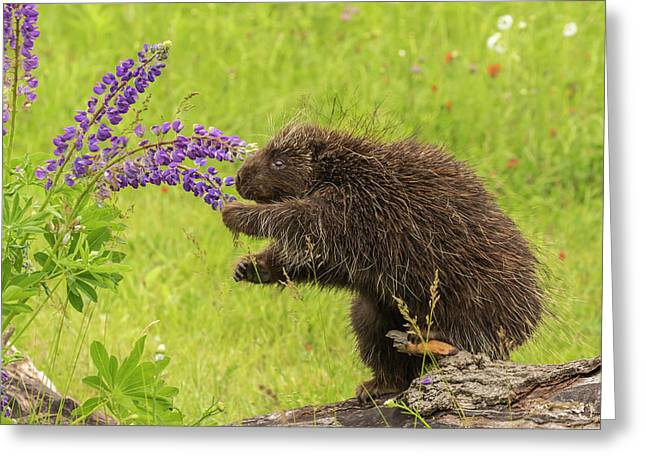 Usa, Minnesota, Minnesota Wildlife Greeting Card by Jaynes Gallery