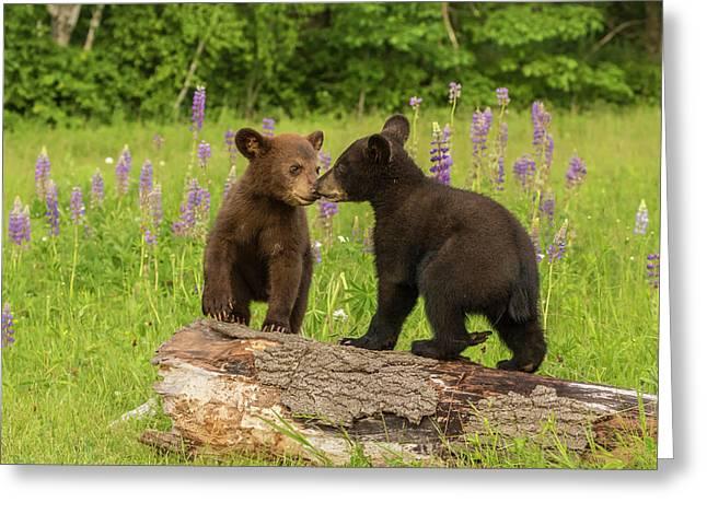 Usa, Minnesota, Minnesota Wildlife Greeting Card by Jaynes Gallery