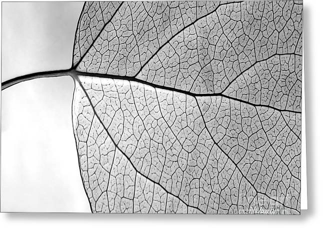 Aspen Leaf Veins Greeting Card