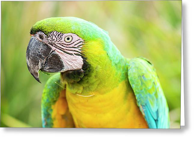 Greeting Card featuring the photograph Beautiful Macaw Bird by Rob D Imagery