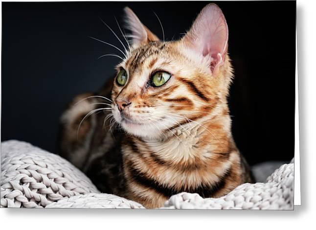 Bengal Cat Portrait Greeting Card