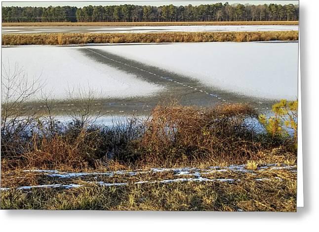 Blackwater National Wildlife Refuge Greeting Card