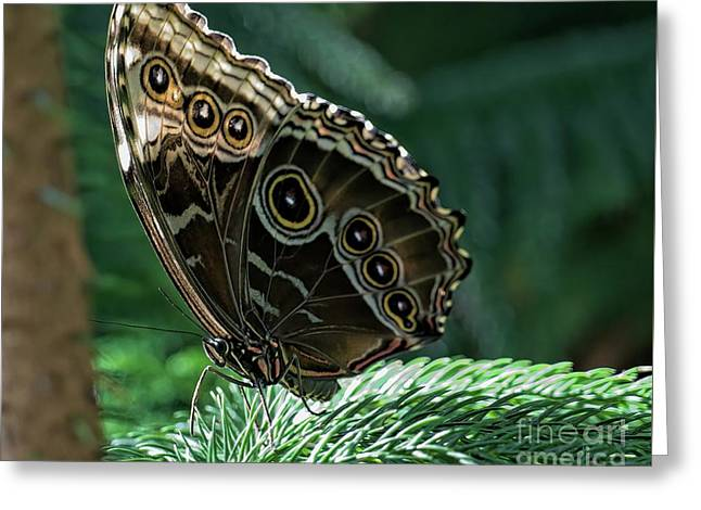 Butterfly Greeting Card by Elijah Knight