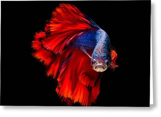Colourful Betta Fish,siamese Fighting Greeting Card
