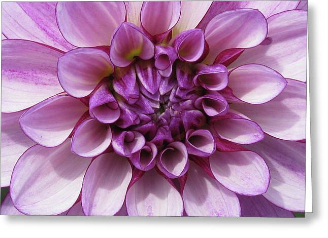Dahlia_0722_13 Greeting Card