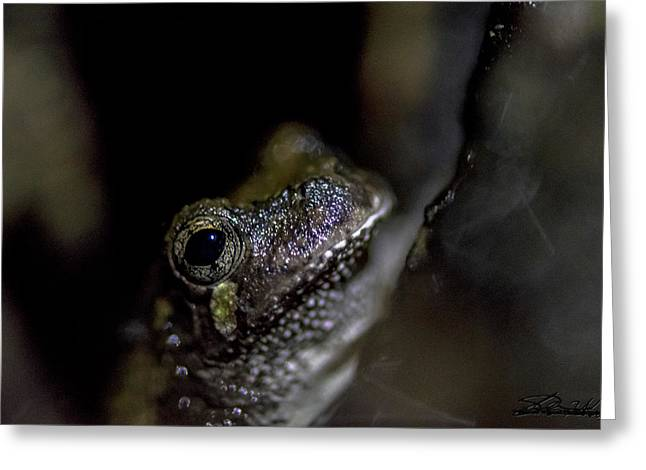 Grey Tree Frog Greeting Card