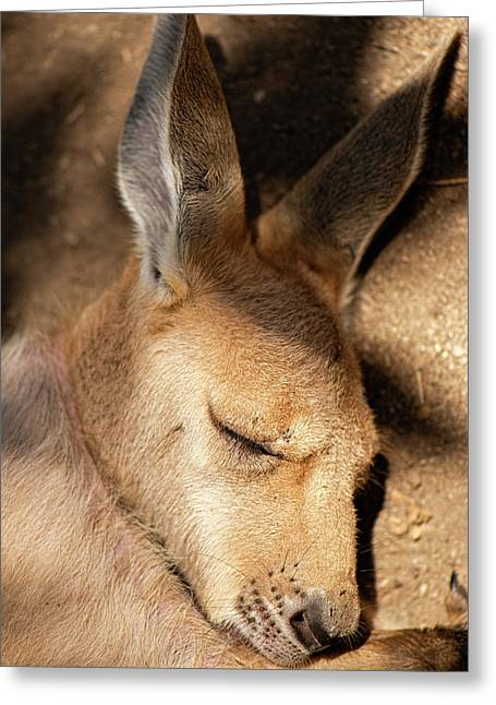 Greeting Card featuring the photograph Kangaroo Joey by Rob D Imagery