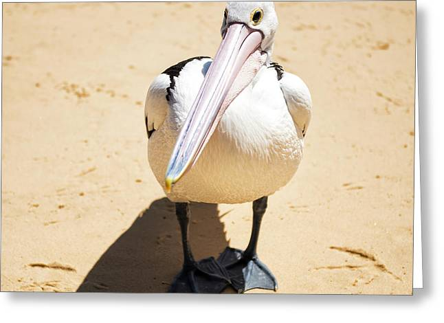 Greeting Card featuring the photograph Pelican During The Day by Rob D Imagery