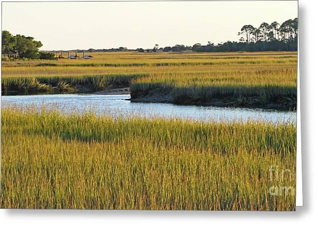 South Carolina Salt Marsh Greeting Card
