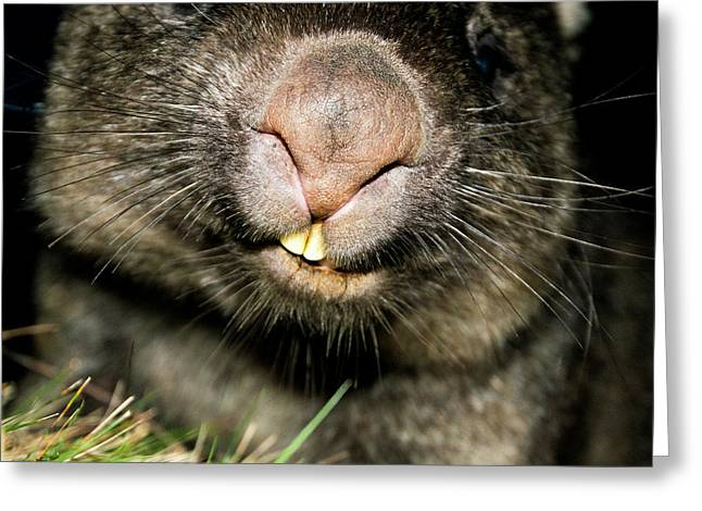 Greeting Card featuring the photograph Wombat At Night by Rob D Imagery