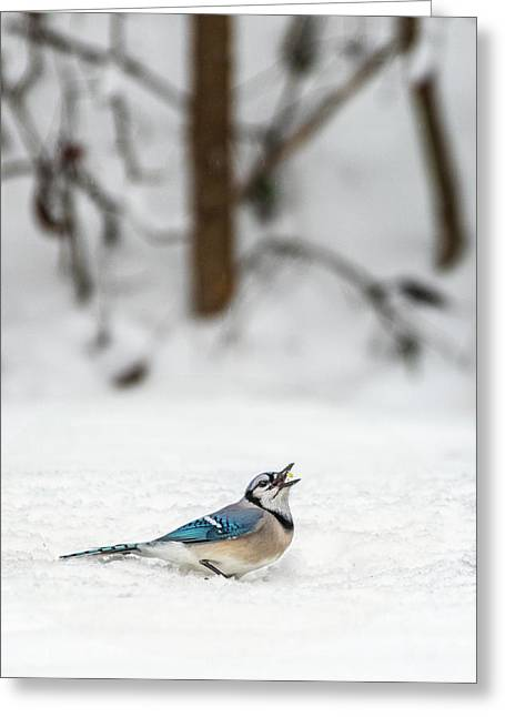 2019 First Snow Fall Greeting Card