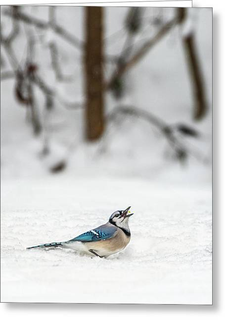 Greeting Card featuring the photograph 2019 First Snow Fall by Cindy Lark Hartman