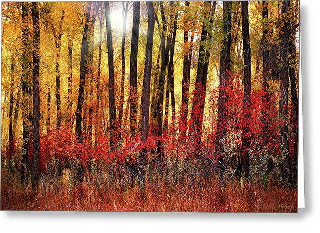 Autumn Light Greeting Card by Leland D Howard