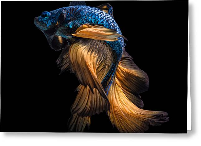Colourful Betta Fish,siamese Fighting Greeting Card