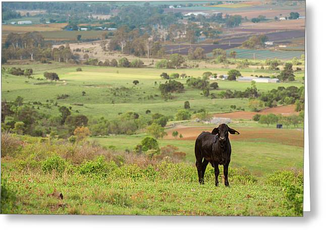 Greeting Card featuring the photograph Cow Outside In The Paddock by Rob D Imagery