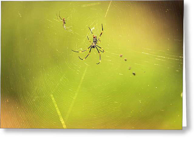Greeting Card featuring the photograph Golden Orb Spider. by Rob D Imagery