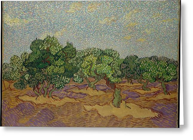 Olive Trees, 1889 Greeting Card