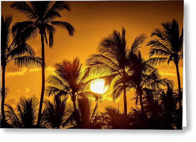 The Sun Setting Through Silhouetted Greeting Card