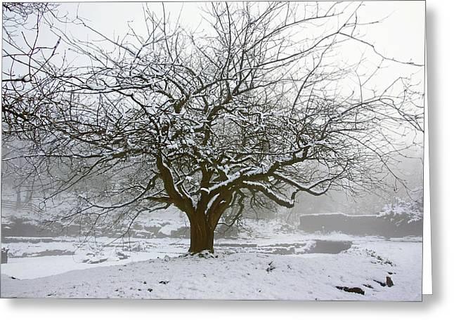 30/01/19  Rivington.  Japanese Pool. Snow Clad Tree. Greeting Card
