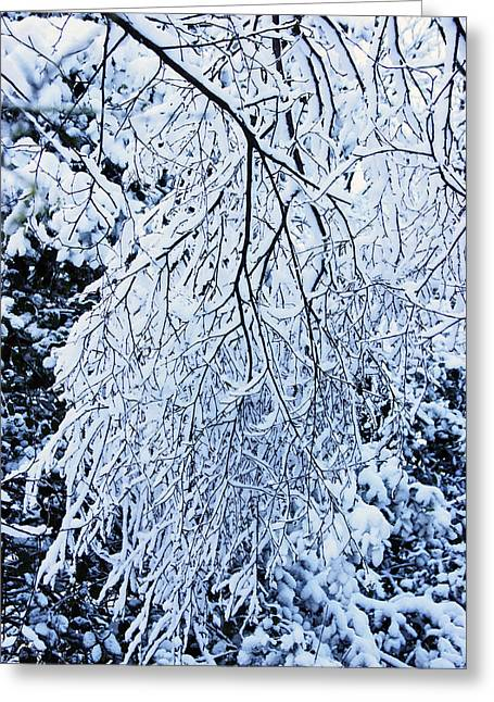 30/01/19  Rivington. Snow Covered Branches. Greeting Card
